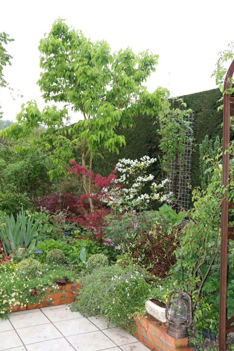 Heptacodium, Cornus Rainbow, Acer palmatum Beni-Komachi, Acer atrolineare
