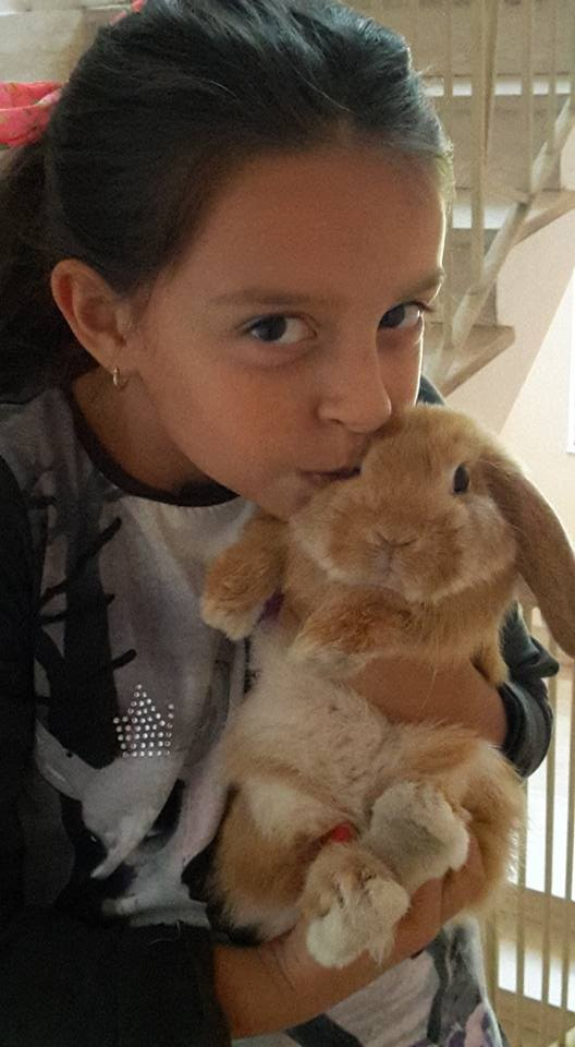 Coniglio nano ariete Fulvo Calabria mini lop coniglietti da compagnia