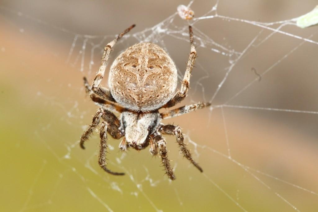 фотографии пауков казахстана американцы вдруг