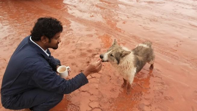 Фото дня 12.01.2015. Инженер кормит бездомную собаку.