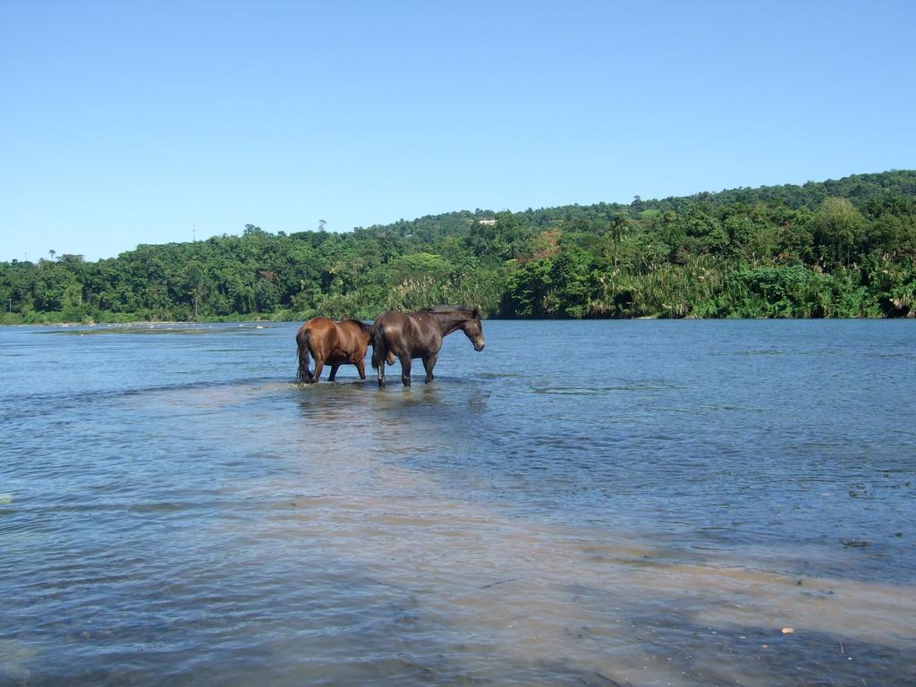 ...mit Flusspferden