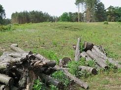 Holzstapel von der NABU-befürworteten Rodungsaktion im Winter 2014/15