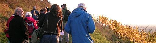 Botanikexkusion in Schriesheim, 6. November 2014