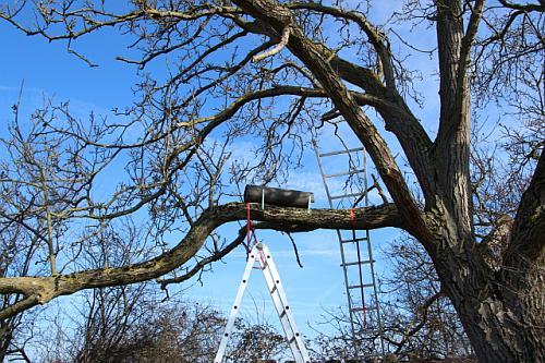 Geschafft! Die neue Steinkauzröhre hängt im Baum