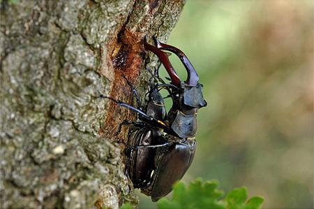 Paarung (Foto: Dr. Detlef Mader)