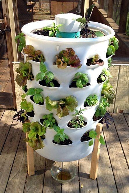 Uso del Compost o Humus