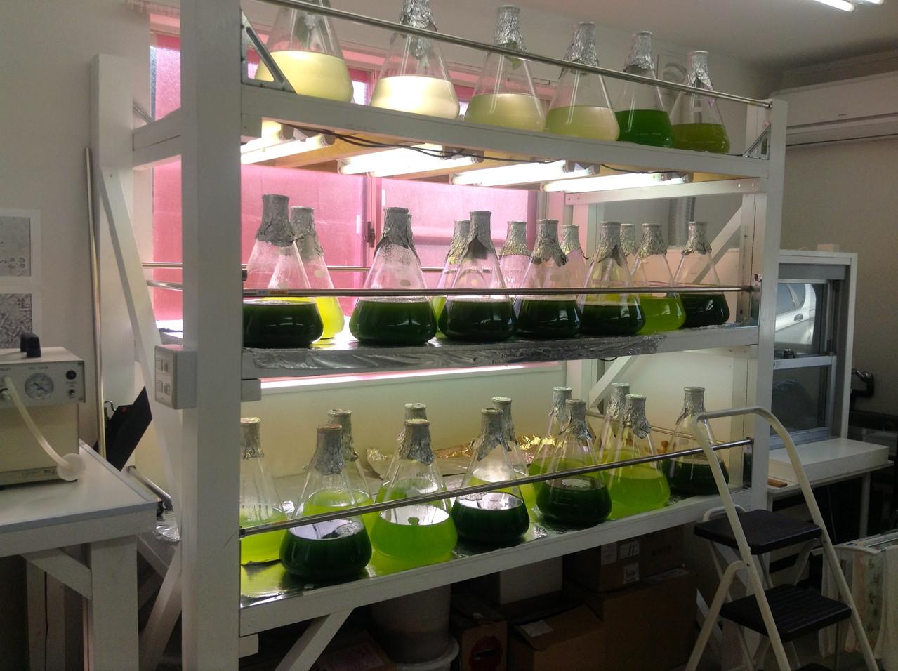5Lのフラスコに入る自然光による藻類培養システム