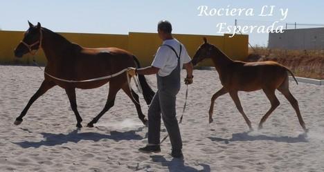 Rociera LI     mit Fohlen Mágica en Rojo