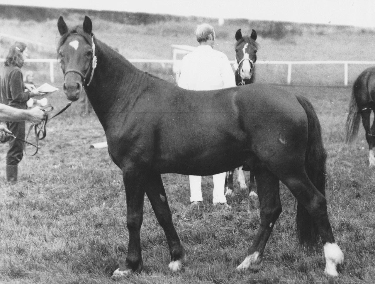 Vater von Bimberg Ebbeni: Pr.H. Bimberg Boyo 1983 im Alter von 3 Jahren