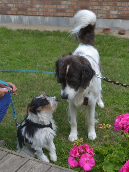 Marie zuhause mit neuem Hundekumpel Macho - das neue Dreamteam <3