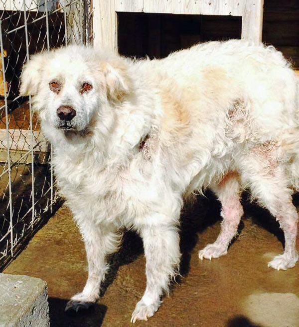 Betty am 15. März 2016 in ihrem Zwinger - sie sieht schlimm aus und es wird Zeit, dass wir sie holen!