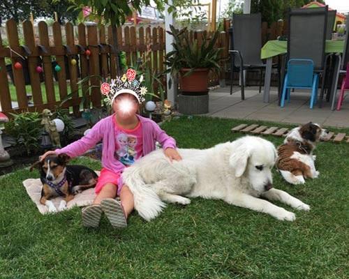 Perla mit ihrem kleinen Menschenmädel und ihren vierbeinigen Freunden