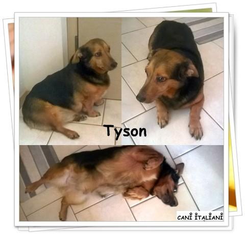 Tyson, als wir ihn im August 2015 in die Vermittlung nahmen