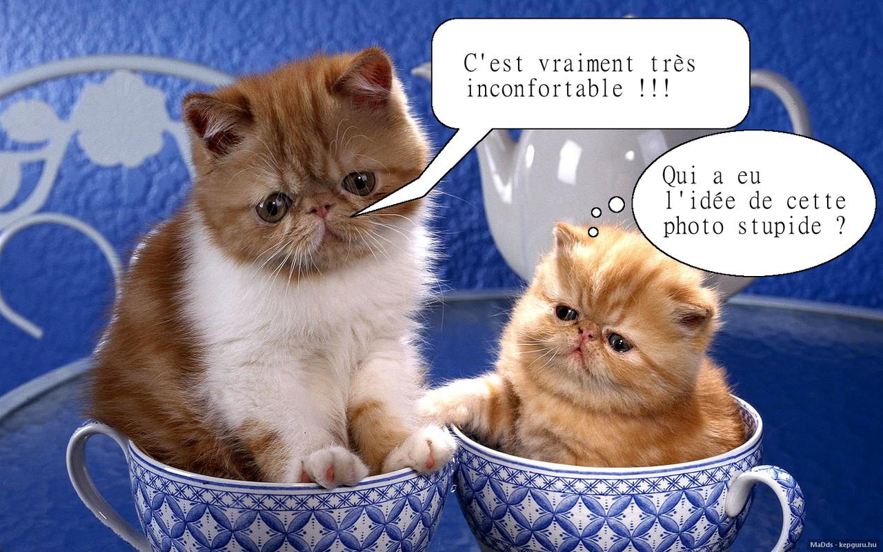 Chats dans tasses