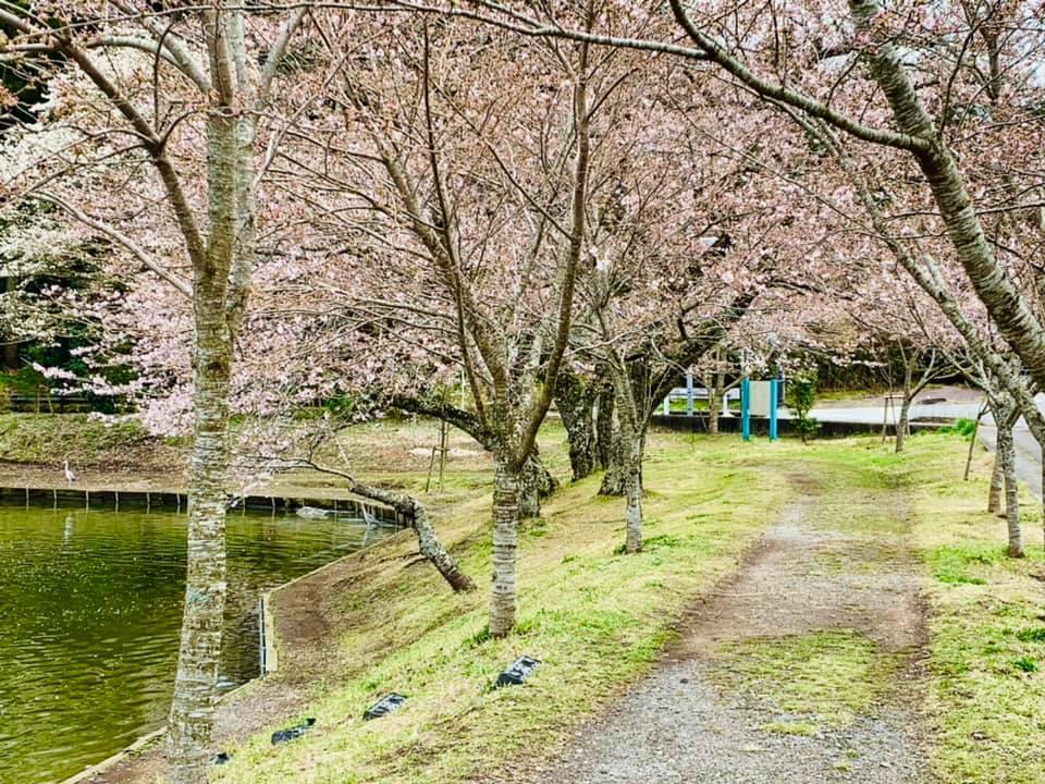 桜ロケーション撮影スタートします!