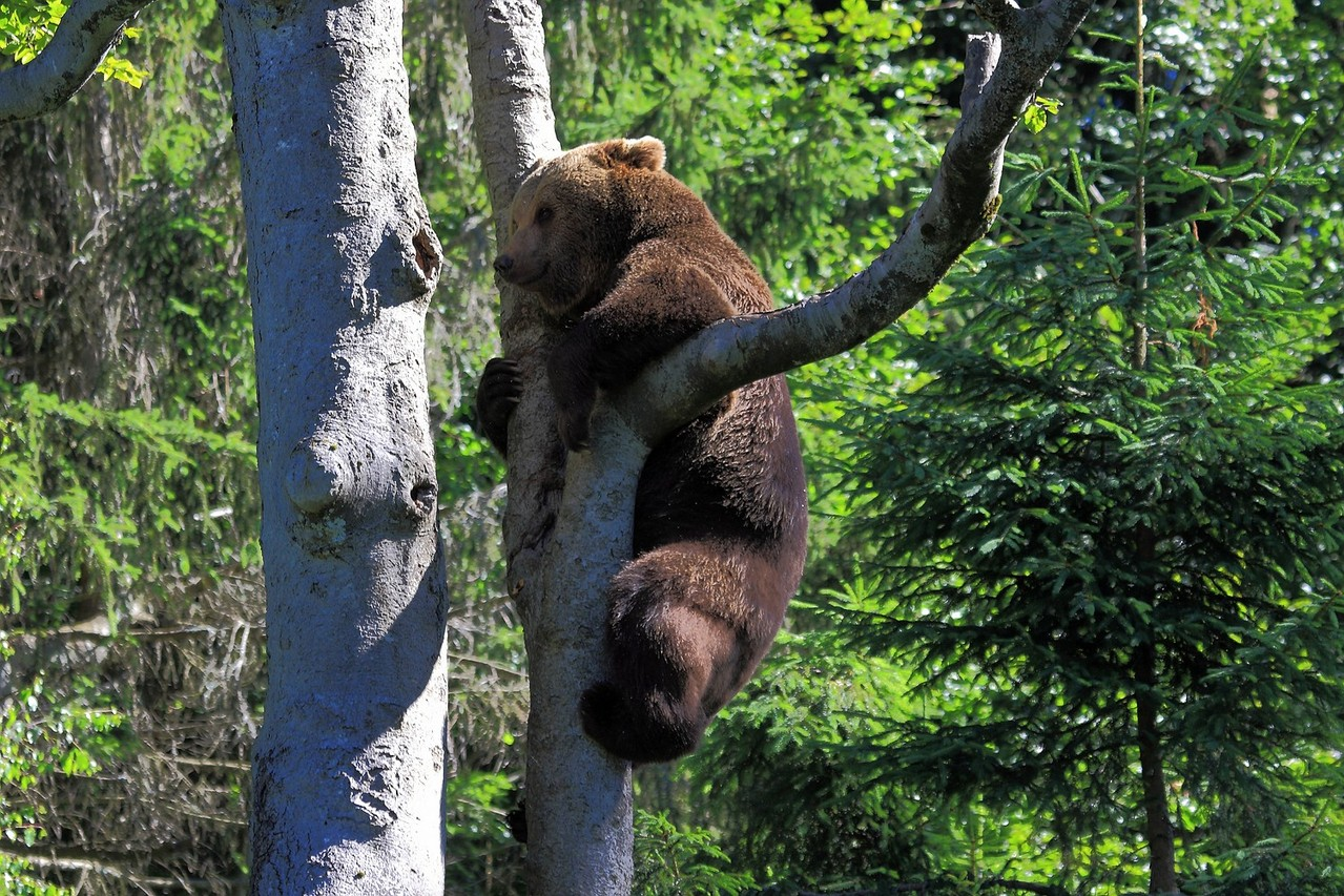 Abhängen am Baum