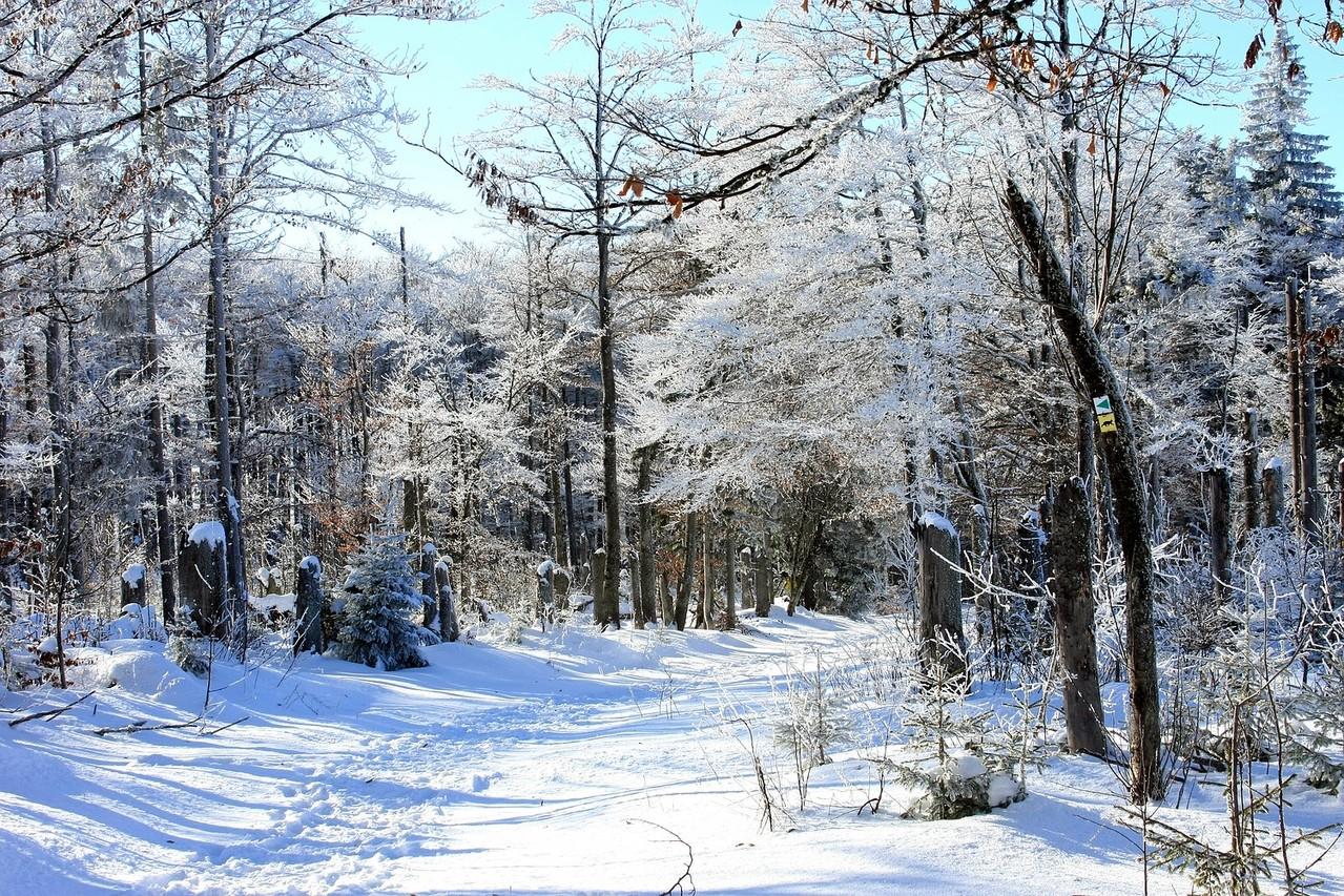 Durch den Winterwald Richtung Lusen