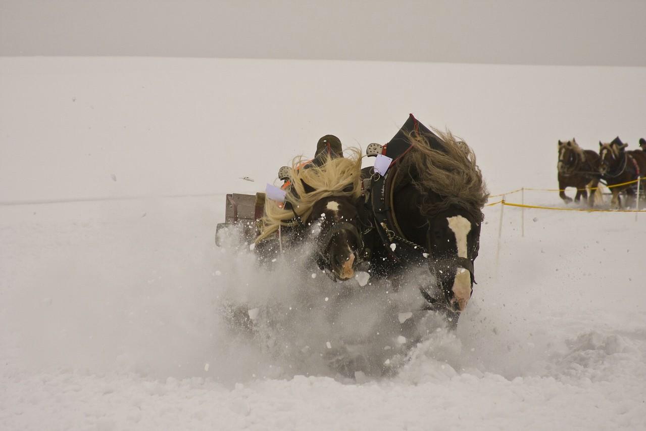 Pferdeschlittenrennen in Rinchnach