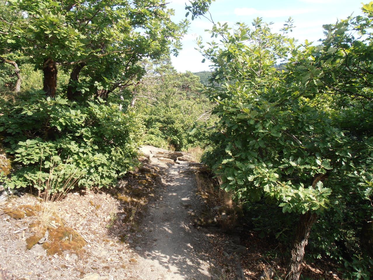 Über Stock und Stein in der rheinischen Toskana