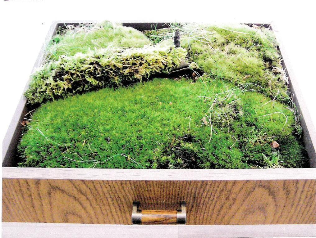 Oase –Privat Moosgarten,    Thema/ Aussen Welt Innen, Innen Welt Außen