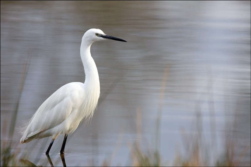 Le Teich, Bassin Arcachon - Bird reserve
