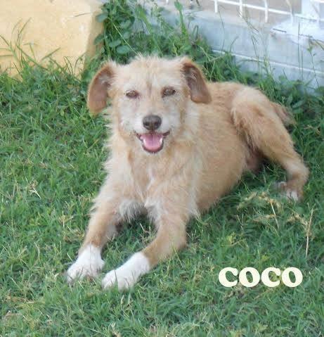 COCO - Adopté