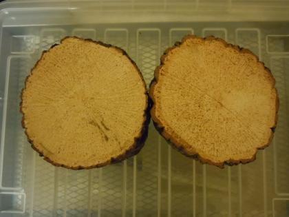 産卵木の皮をむいて加水して陰干しします