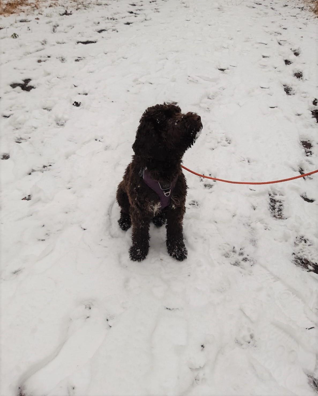 Bella auf einem Schneespaziergang