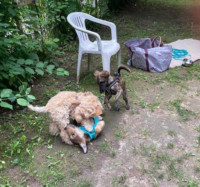 meine Kumpels in der Hundeschule