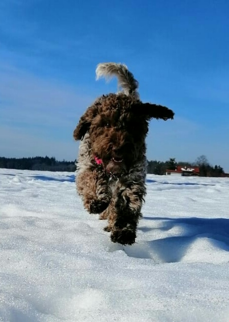 auch Belly hat viel Spaß im Schnee