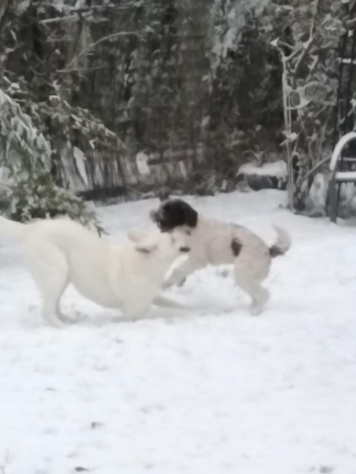 und hat viel Spaß im Schnee