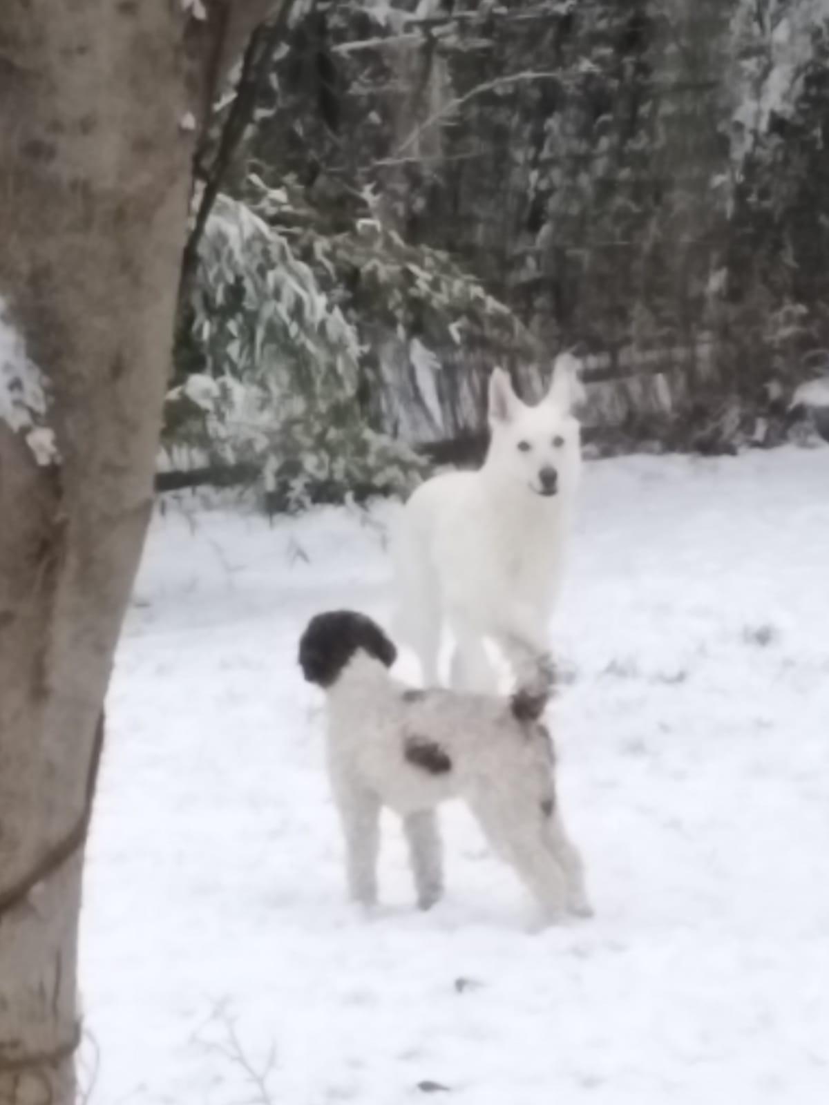 Das Dorle schickt verschneite Grüsse