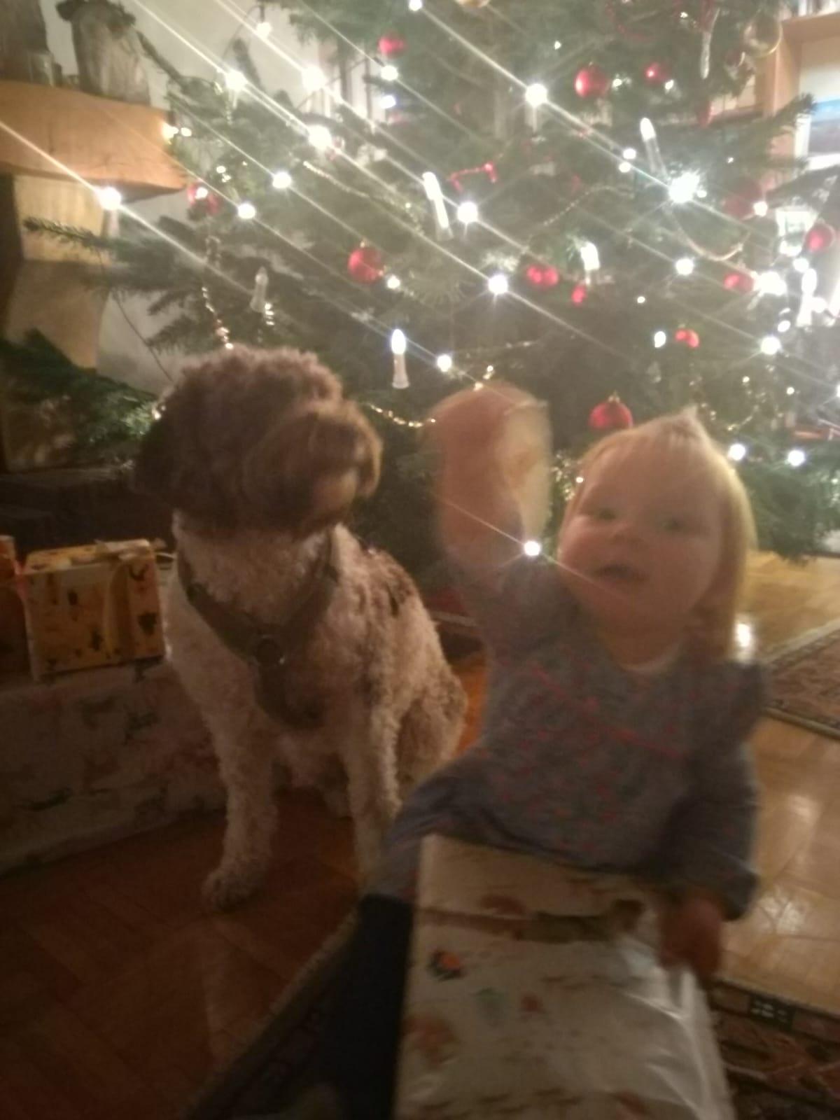 ein schönes Weihnachtsfest von Lotti und Marlene