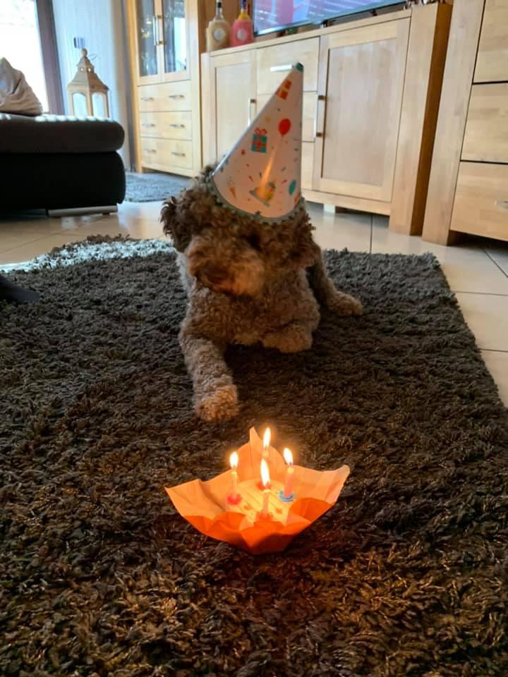 Amaretto feiert seinen 4. Geburtstag