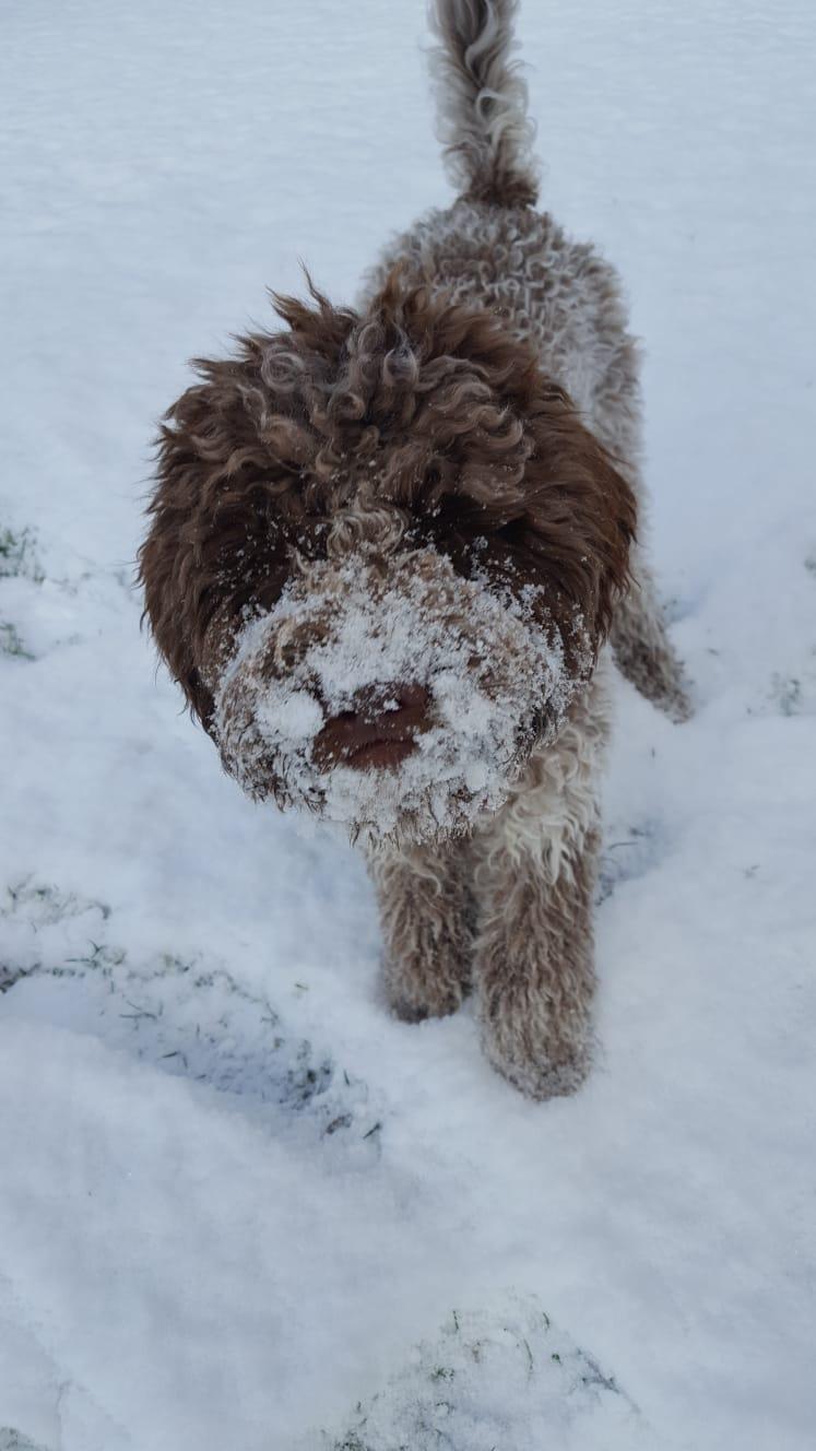 Paula hat Spaß im Schnee .....