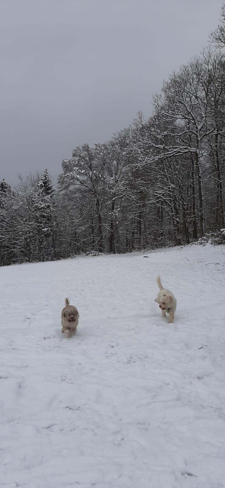 Holly tobt mit Kumpel Kecks im Schnee