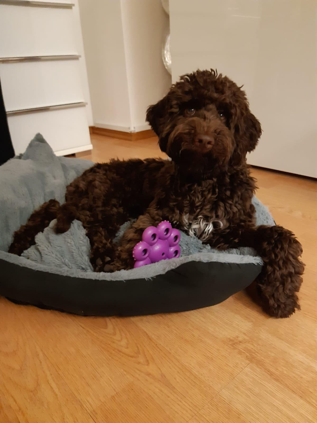 Bella startet entspannt ins neue Jahr