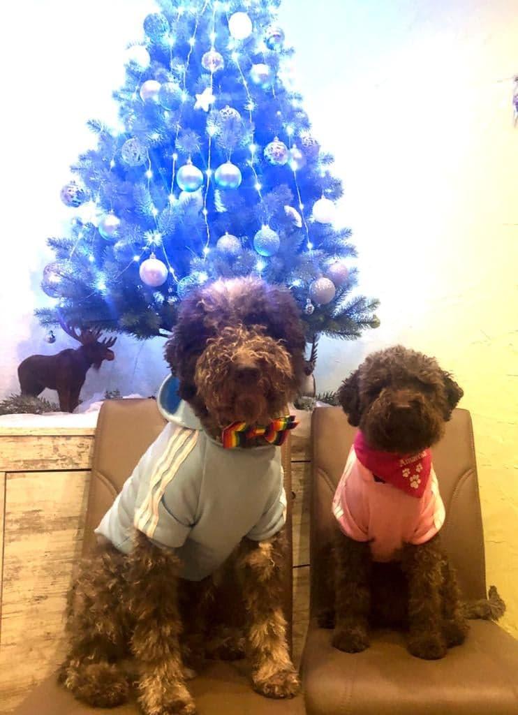 Prost Neujahr Ringo und Amarena