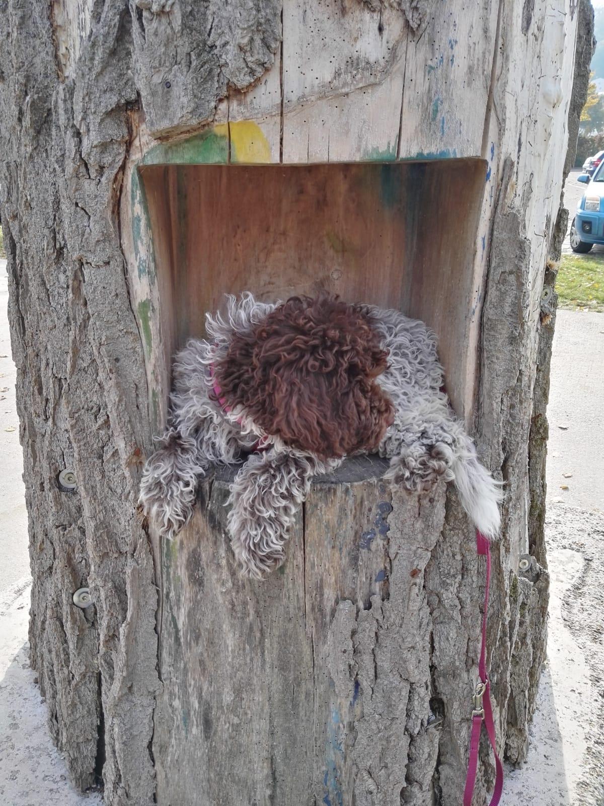 im Baum geparkt