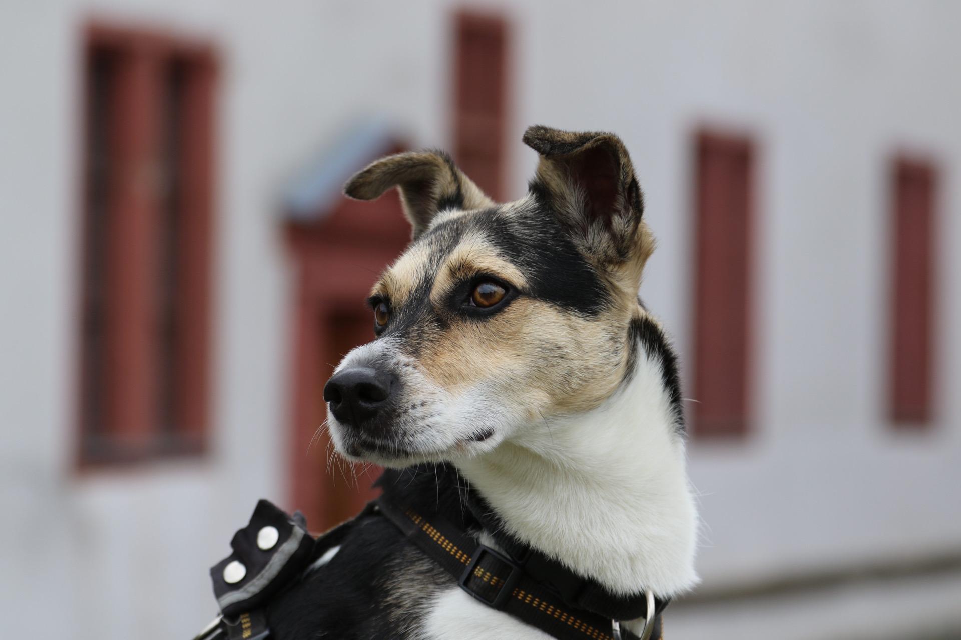 schönster Schlosshund ...