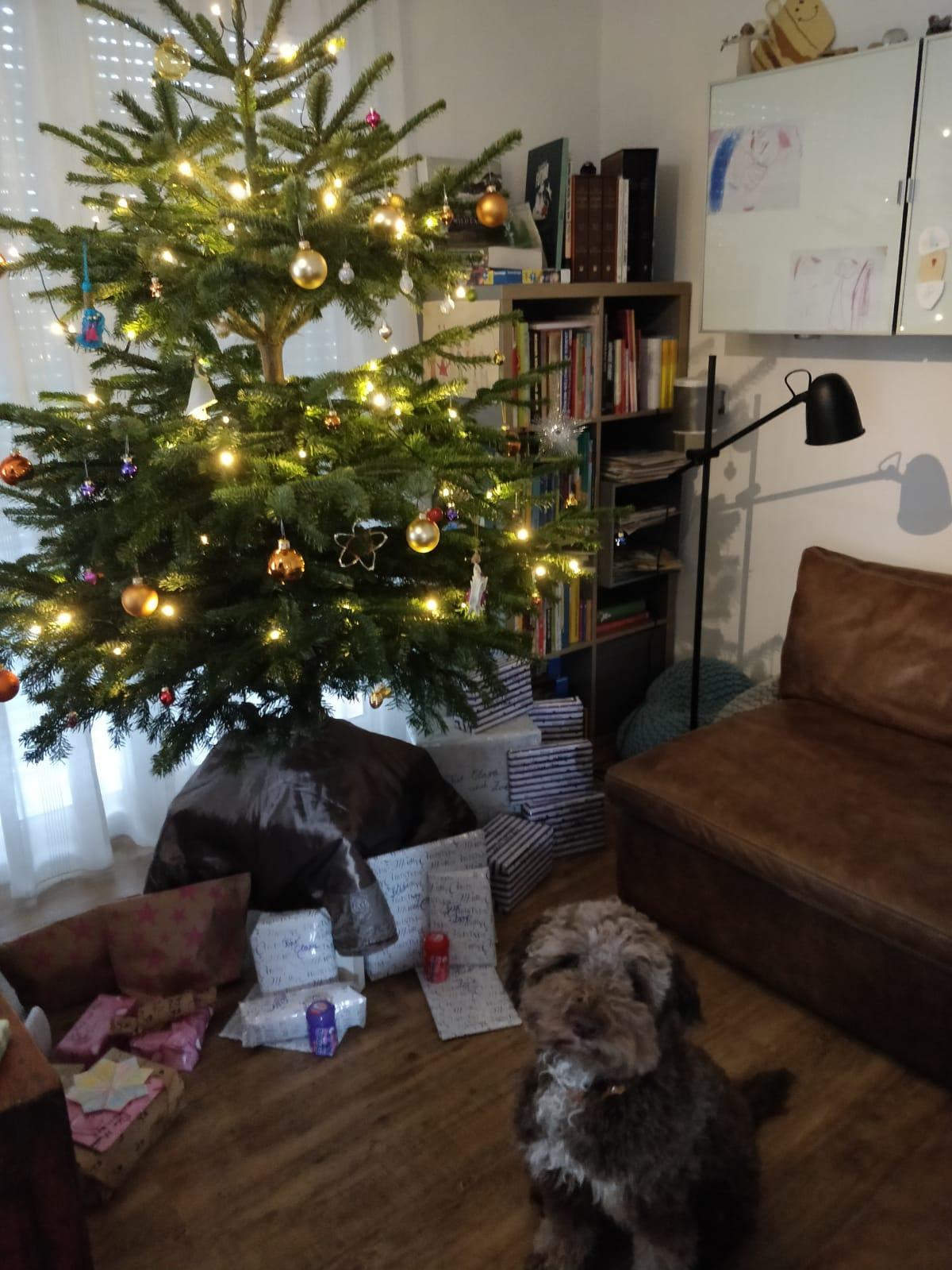 Calimero wünscht frohe Weihnachten