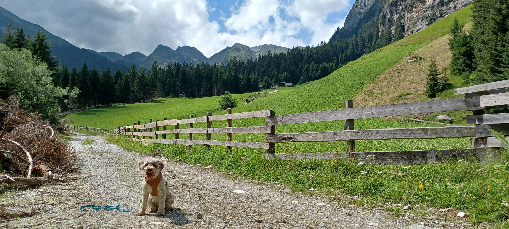 Holly schickt Urlaubsgrüße aus den Bergen
