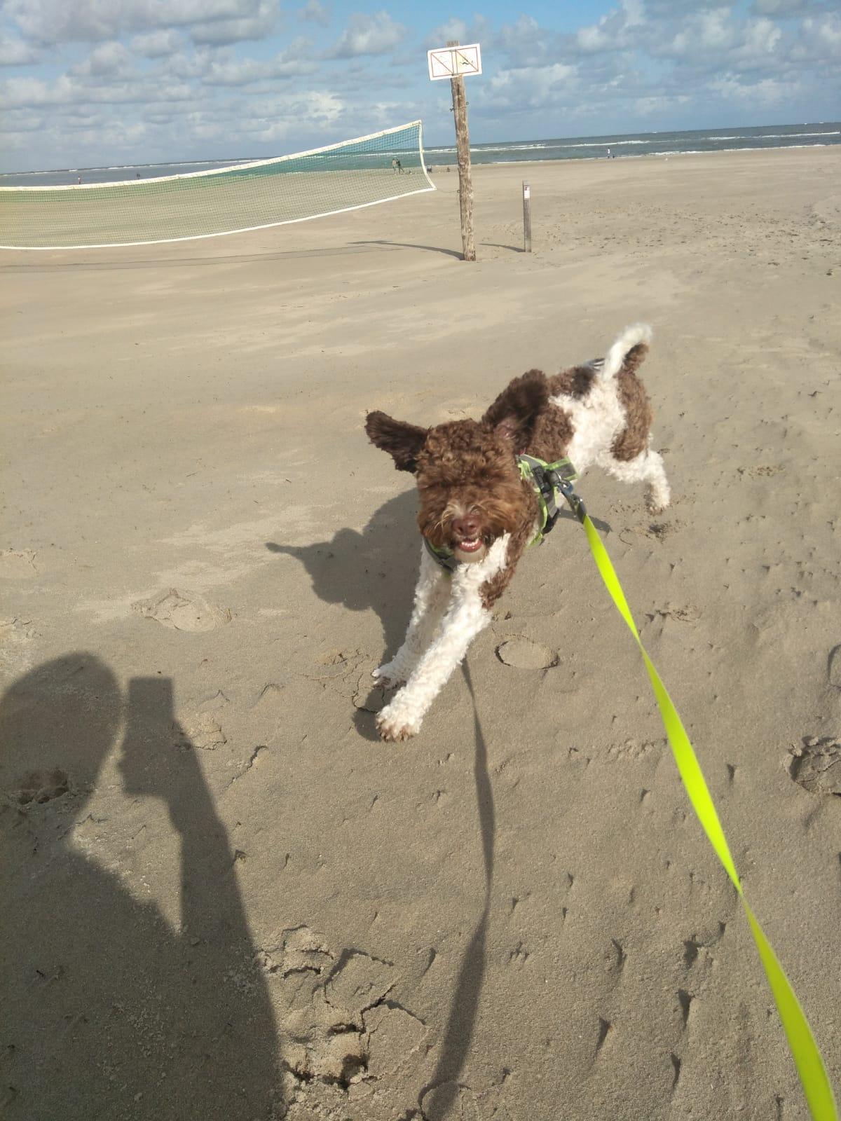 und tobt am Strand