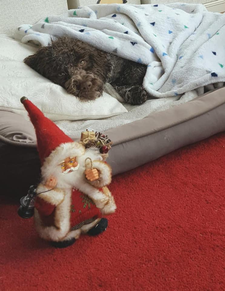 Nikolaustag ist anstrengend