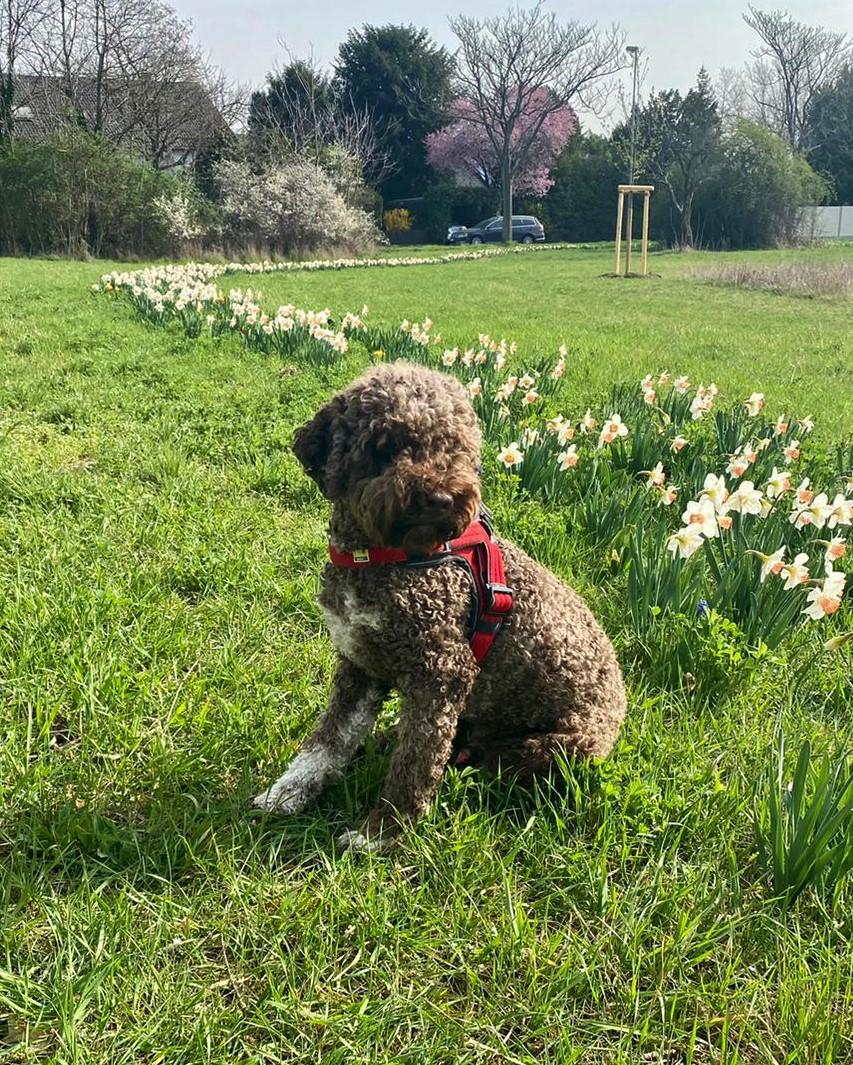 auch der Charlie geniesst den Frühling
