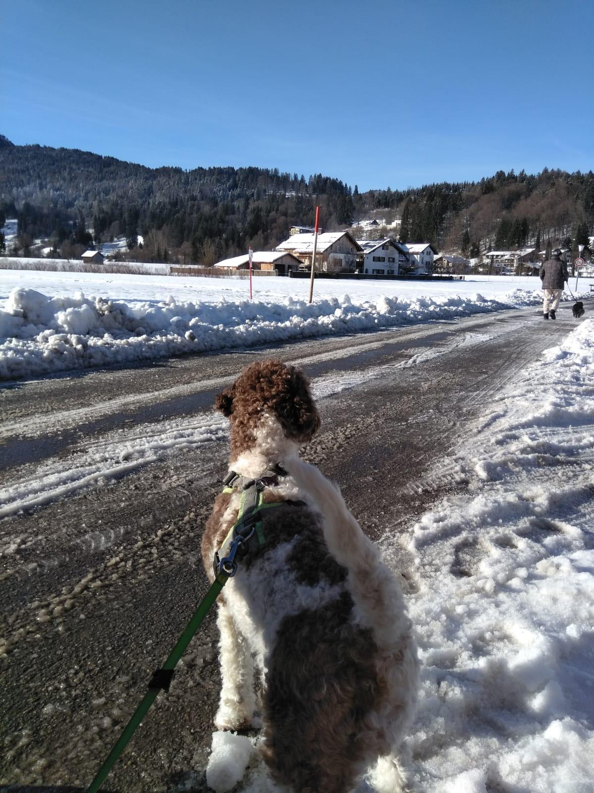 Lotti macht Urlaub im Schnee