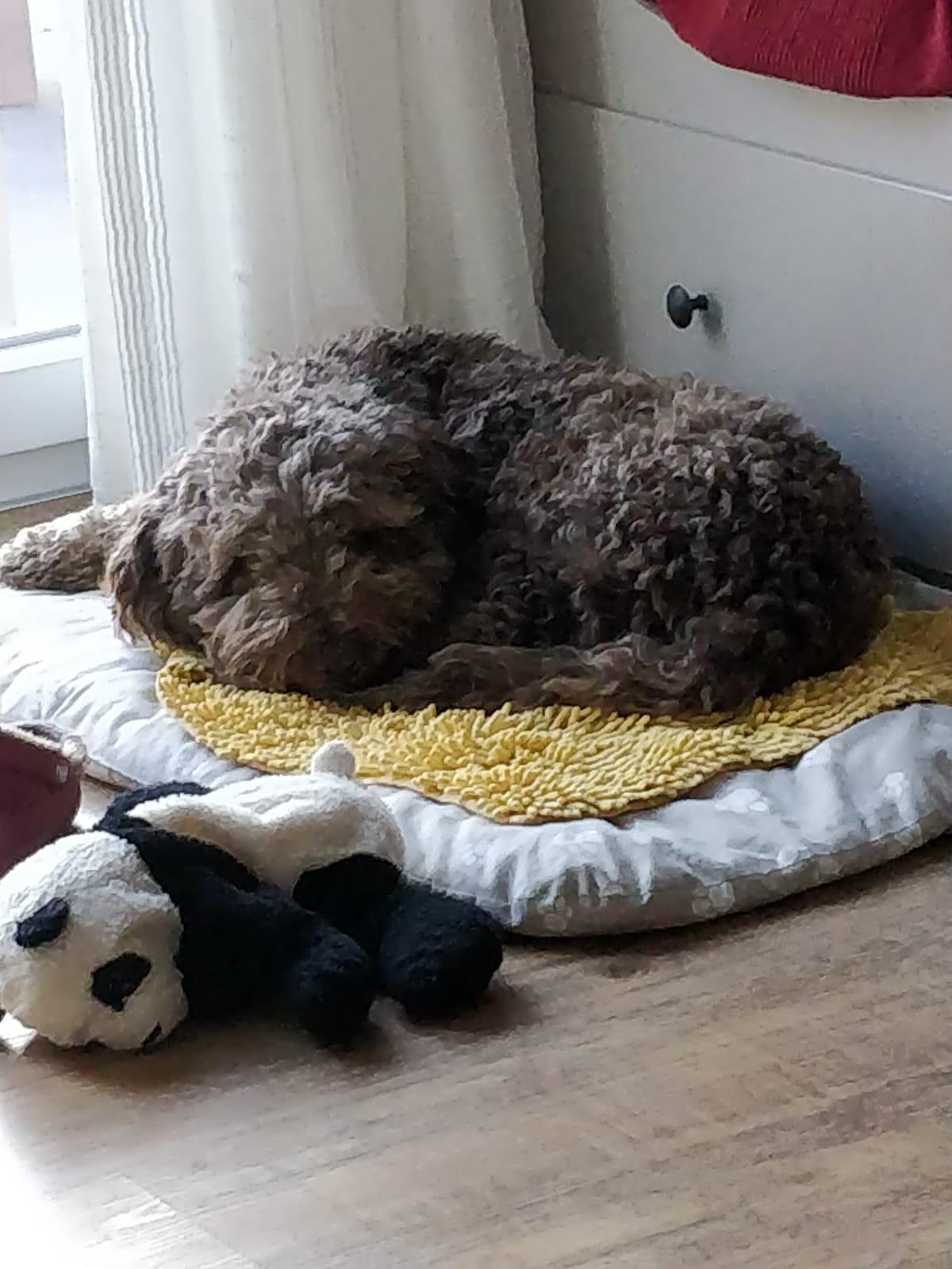 Calimero kuschelt auf seiner Decke