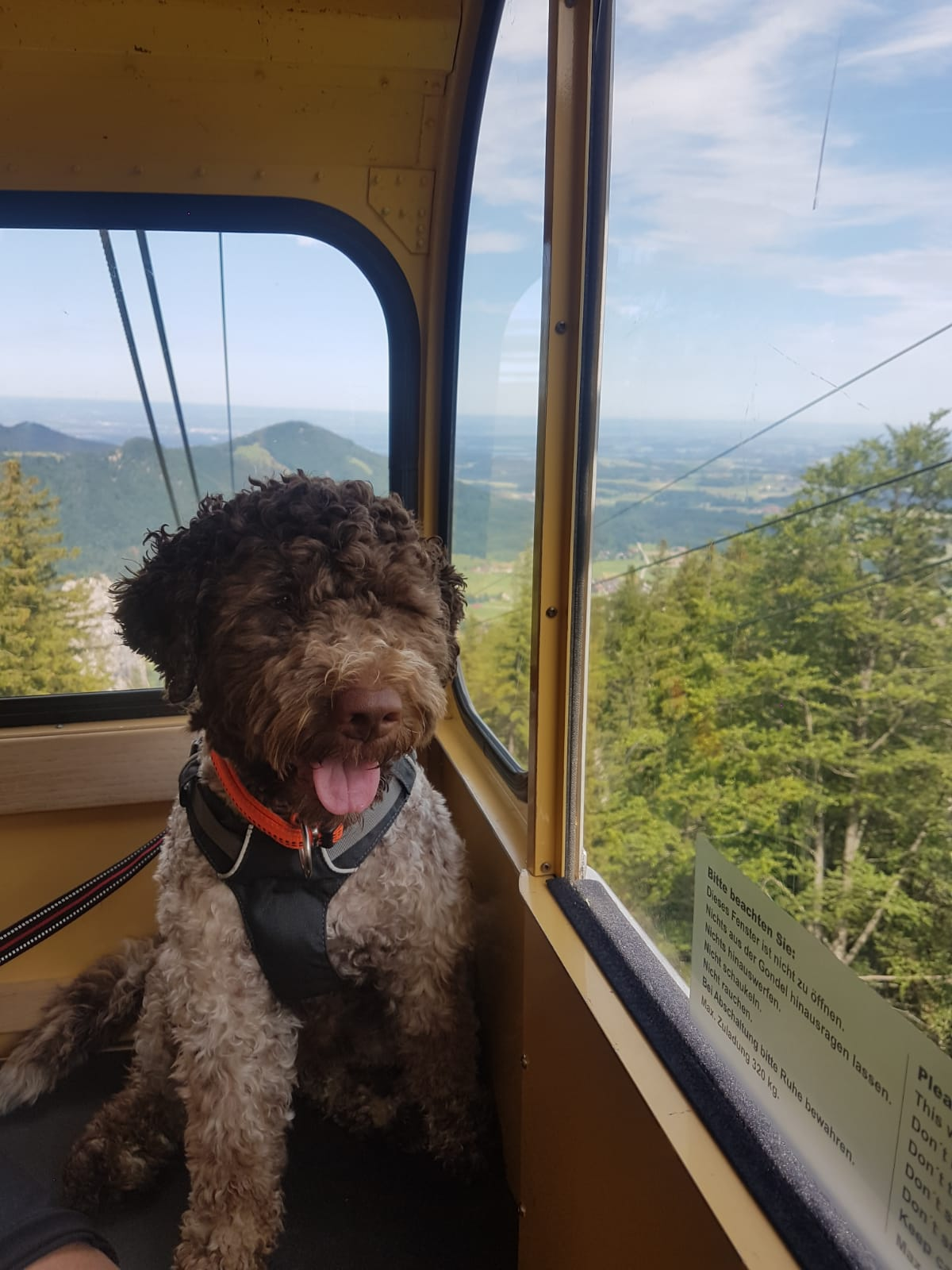 Bo macht Urlaub im Chiemgau