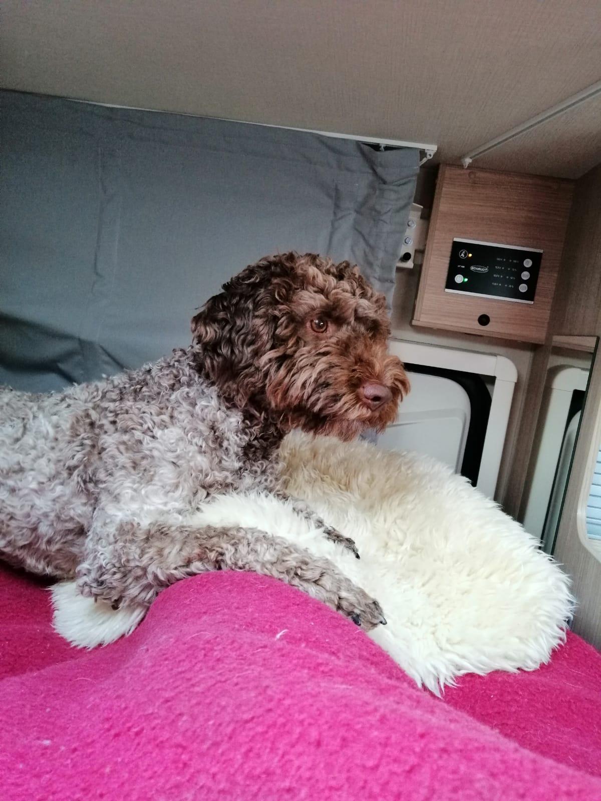 Wohnmobil-Wachhund