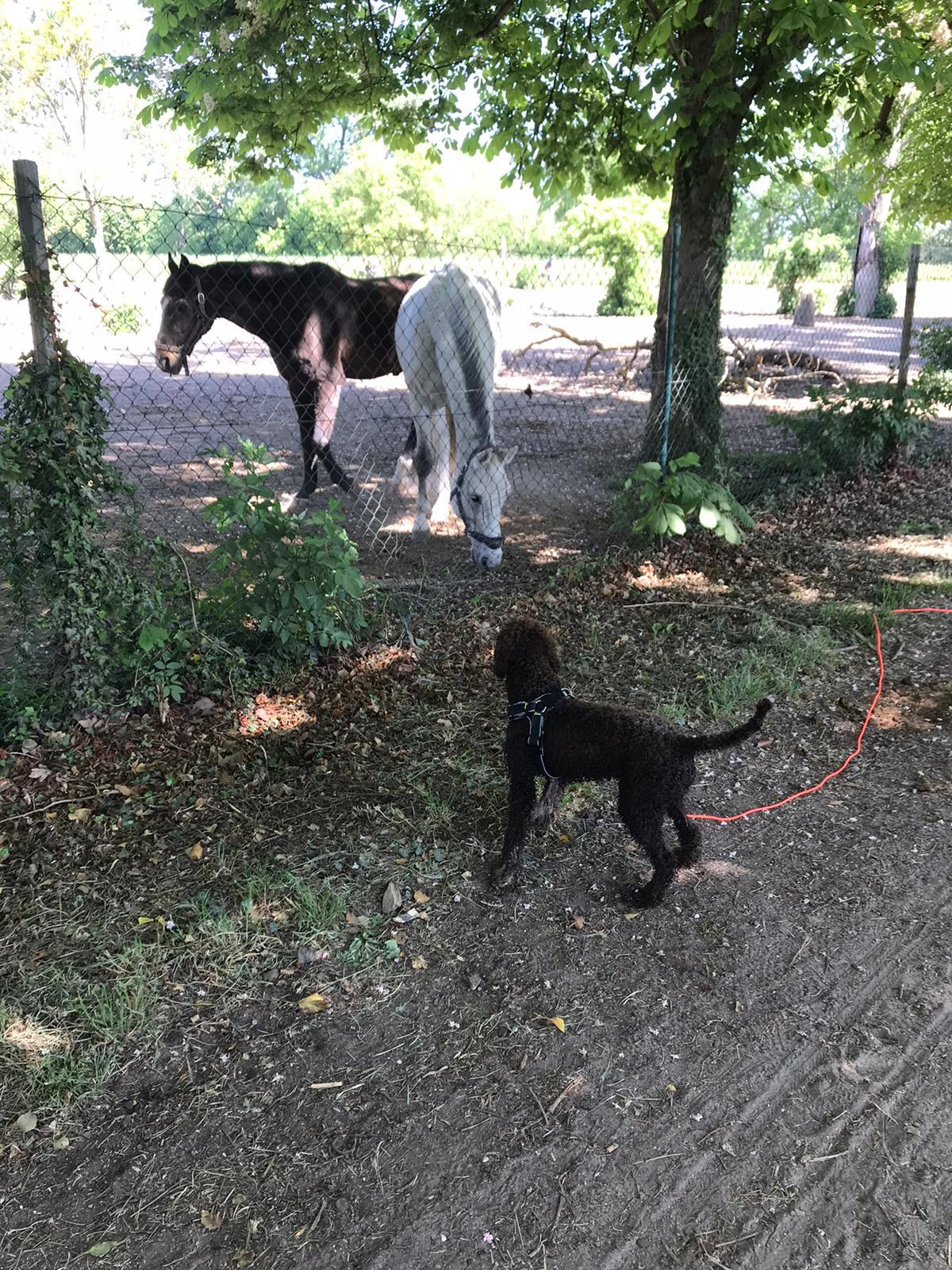 Pferde sind ganz besonders große Hunde